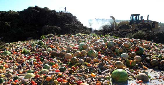 Food waste o spreco di cibo
