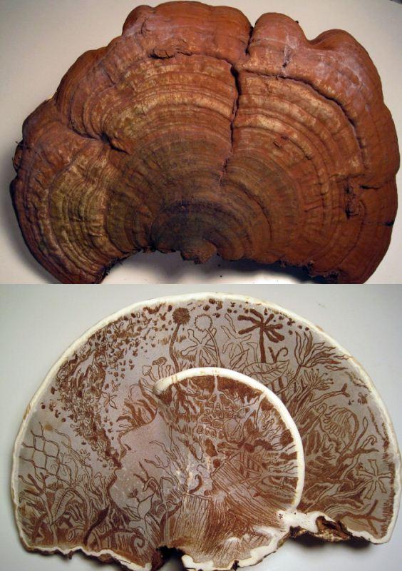 mushroom artFB