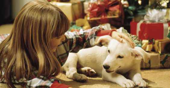 natale_animal_friendly
