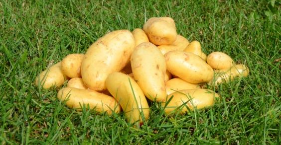patate mal di testa