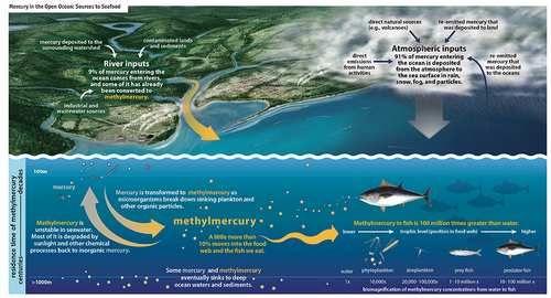 pesce mercurio infografica