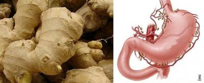 Segnatura delle forma: il rizoma di zenzero come lo stomaco