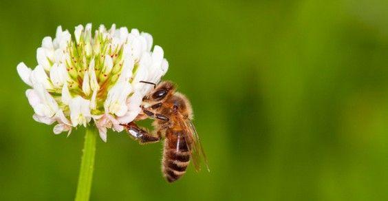 api neonicotinoidi petizione