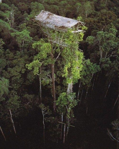 case sugli alberi korowai 2