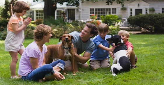 famiglia animali