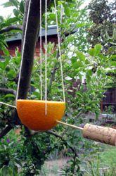 mangiatoia arancia