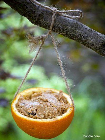 mangiatoia arancia2