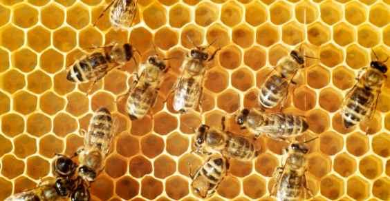 moria api pesticidi neonicotinoidi