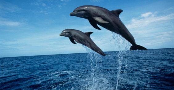 delfini tirreno