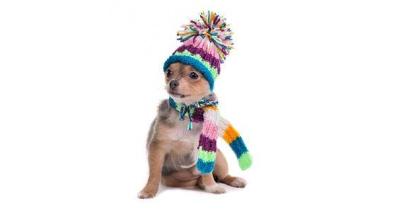 freddo_animali