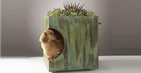 tetto verde cuccia