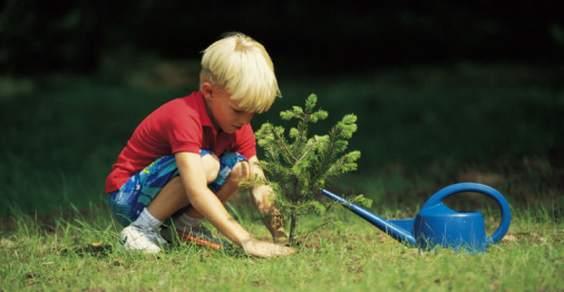 piantare alberi nuovi nati