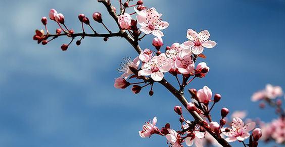 equinozio primavera - fonte foto: wordnik.com