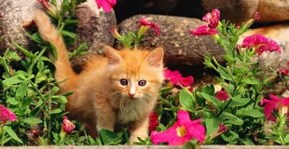 gatti fiori piante velenose - fonte foto: wallpaper777.com