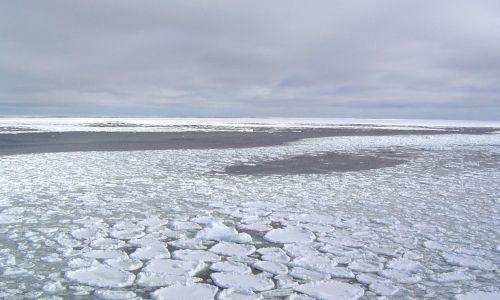 ghiacci artico