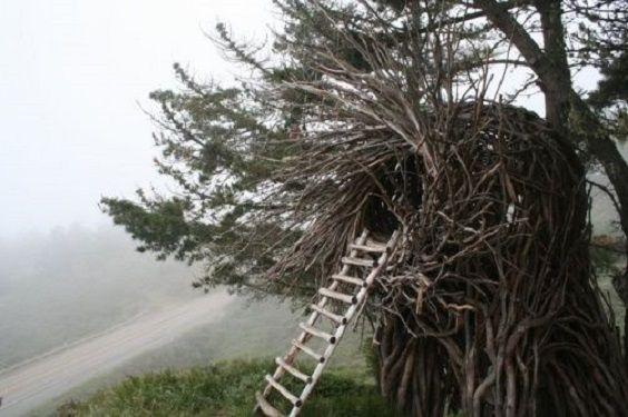 nido umano2