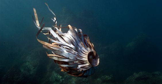 sculture subacquee