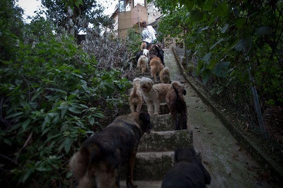 uomo 100 cani1