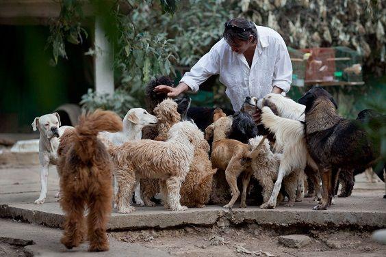 uomo 100 cani3
