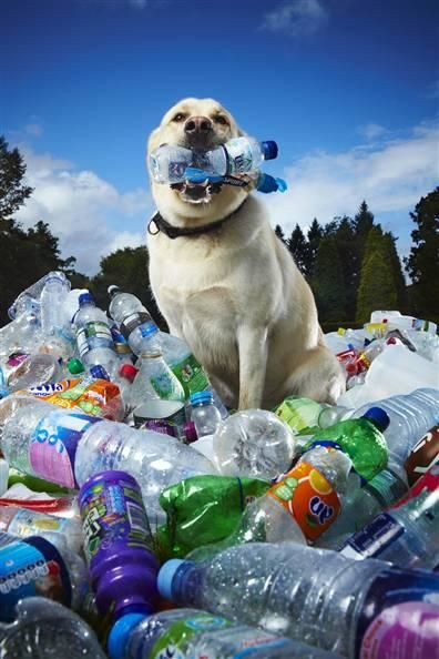 Tubby-recycling-dog2