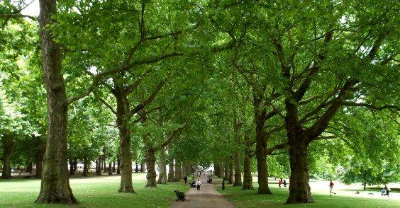 aree verdi umore