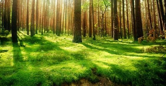 foreste riscaldamento globale - fonte foto: wall.alphacoders.com
