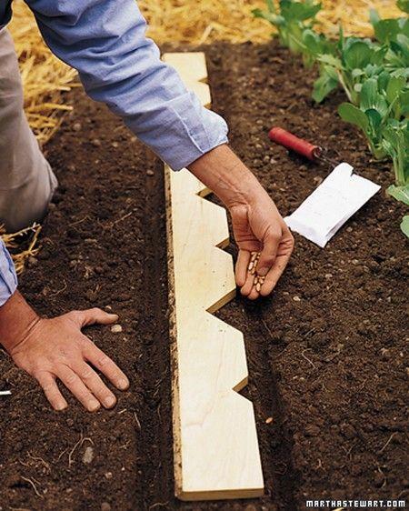 orto trucchi 4 distanziatore semine