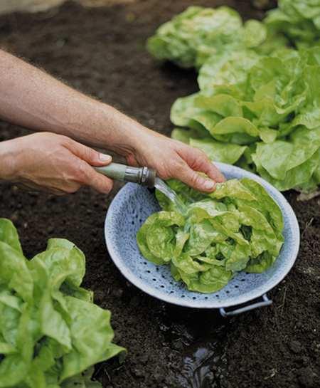 orto trucchi 5 risciacquare verdure