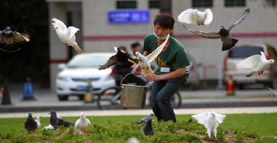 piccioni cina