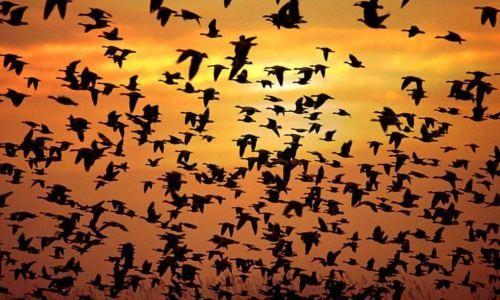 uccelli birds