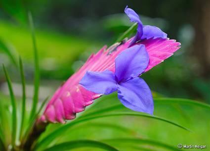 b2ap3_thumbnail_tillandisa-flower.jpg