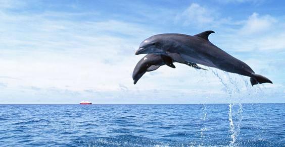 delfini pelagos - fonte foto: bestwallpaperhd.com
