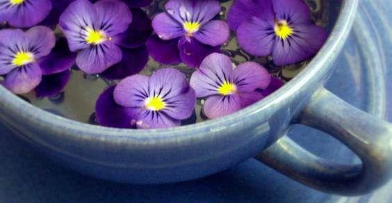 Erbe e fiori primaverili