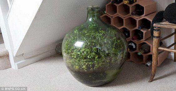 giardino in bottiglia 3