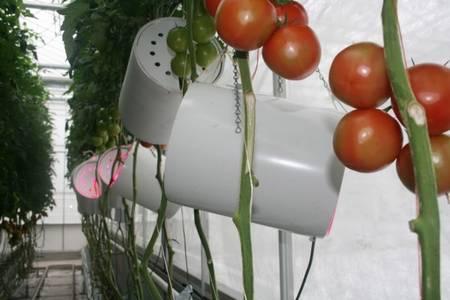 pomodori led - fonte foto: treehugger.com
