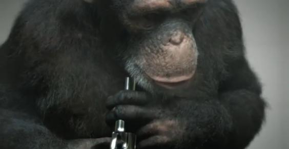 scimmie peta
