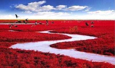 4---Red-beach2-