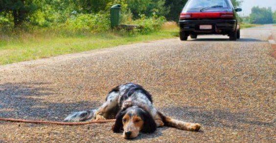 cane abbandono