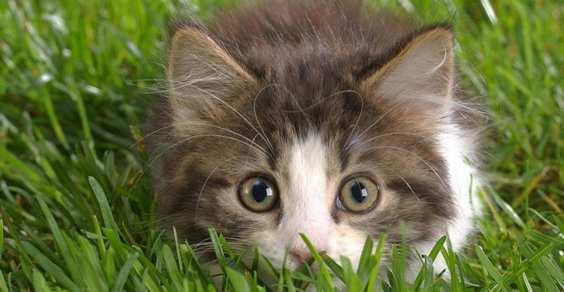 gatti orto giardino