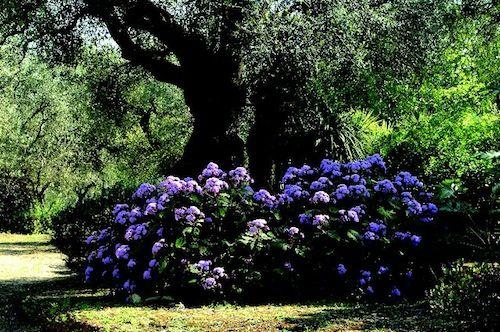 0000010-Giardino-botanico-giardino-Lama-degli-Ulivi