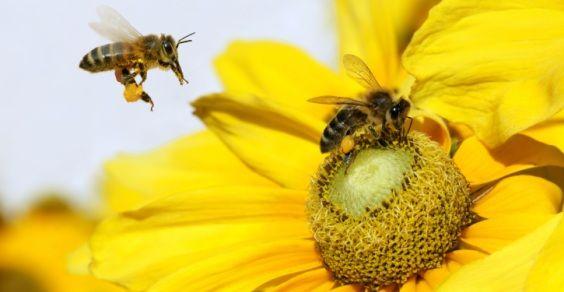 api pesticidi