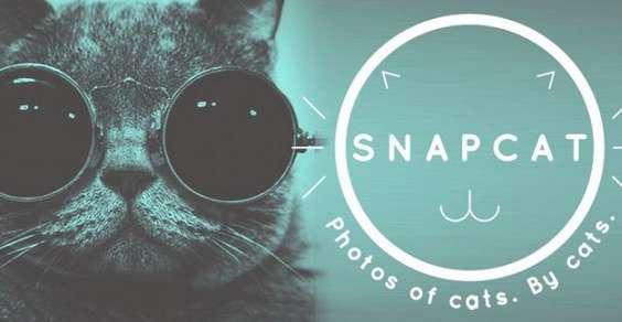 app gatti fotografi