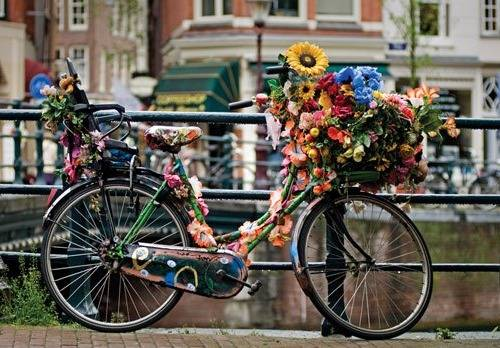 b2ap3_thumbnail_bici.amsterdam.jpg