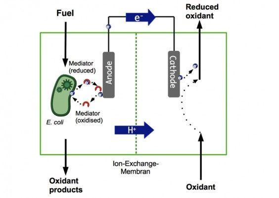 batteri cacca
