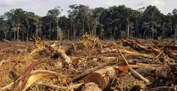 deforestazione ue