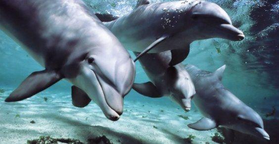 delfini nomi