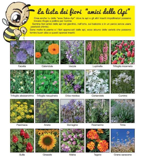 fiori salva api