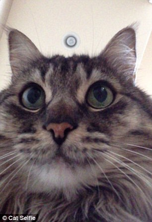 gatti fotografi 1