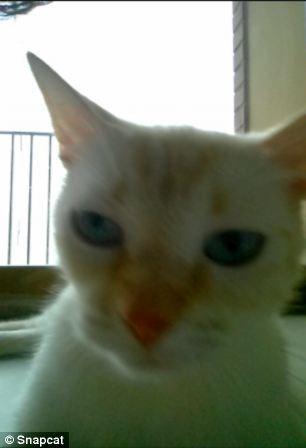 gatti fotografi 2