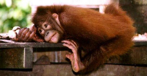 olio di palma starbucks petizione